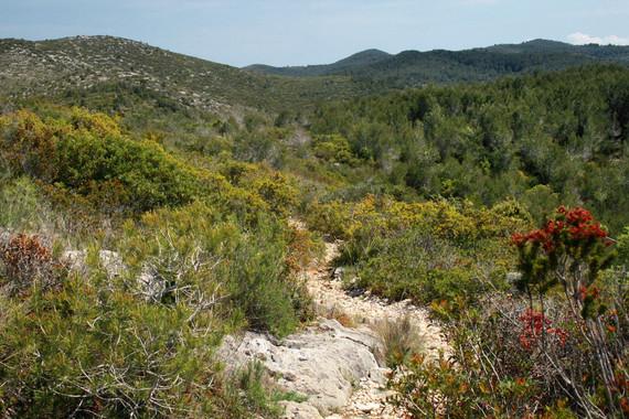 Matorral del Parque Natural del Garraf.