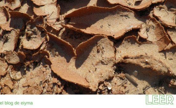 Nuevo estándar ISO para combatir la degradación de la tierra